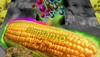 Probado de nuevo: Monsanto causa Cancer.