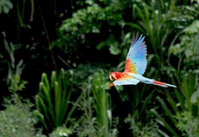 0219.macaw.GowriVaranashi.568