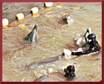 dolphin torture
