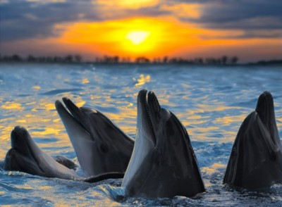 dolphins-537x395