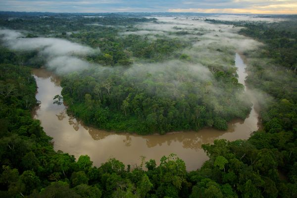 Morning mist floats above the Tiputini River in Yasuní National Park, Ecuador. Photograph by Tim Laman, National Geographic  with thanks