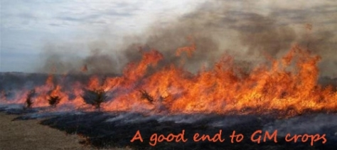 burn-monsanto