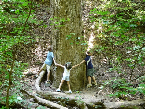 TreeHuggers-steew4