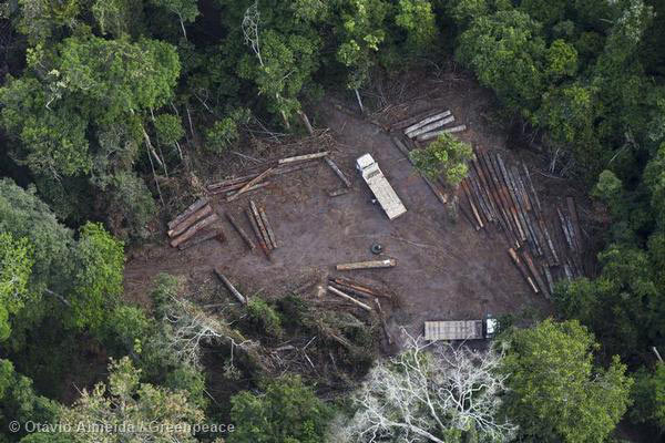 Illegal Logging in Para State, Brazil as revealed by Greenpeace activists.