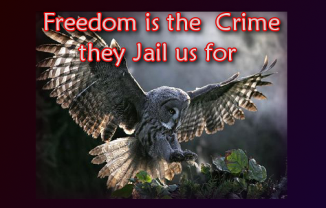 Freedom is the crime
