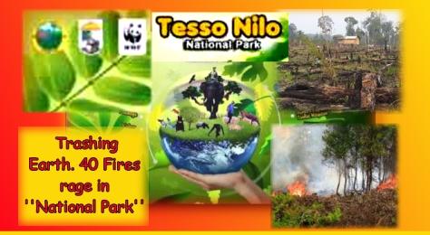 Tesso Nilo 40 fires