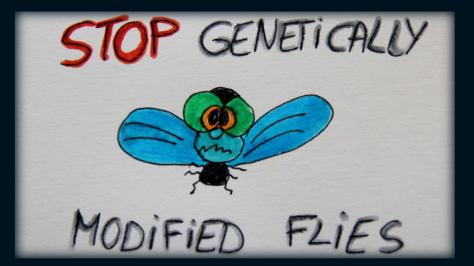 stop gmo flies