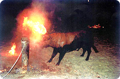 the 'embolar' ''sport'' consists of tying fire onto the animals horns while tied to a post. This is whar the accused prevented, with a total of 200,000 euros in fines against them