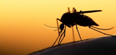 insect_mosquito_735_350-400x190