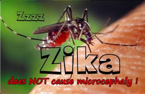 zika is harmless