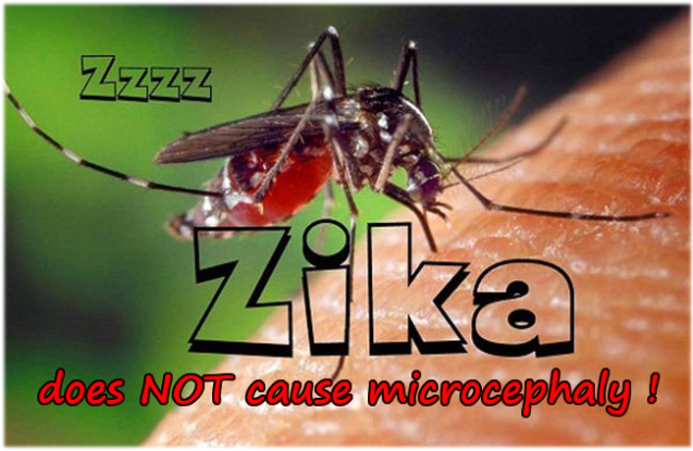 zika is harmless