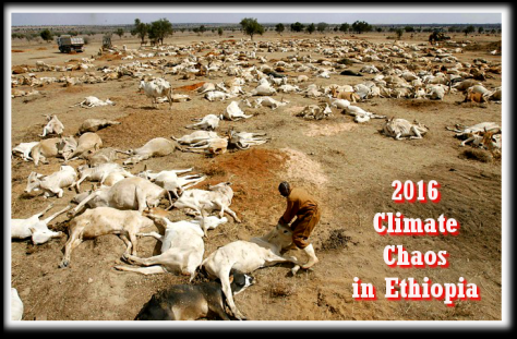 climate Chaos 2016