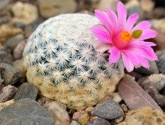 235-cactus-species-extinct