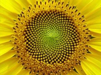 WOW-Amazing-FI-Plant-Forms