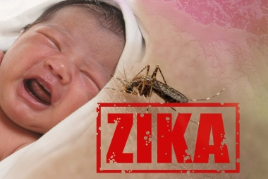 Typical Scare Mongering Photo: Health issue concept image of crying baby bitten by Aedes Aegypti mosquito as Zika Virus carrier
