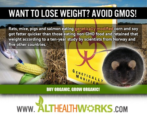 gmo-weight-gain-fat-loss