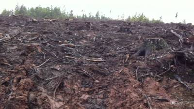 clear cutting policy ion New Brunswick