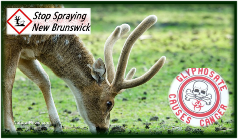 stop Monsanto spraying New Brunswick