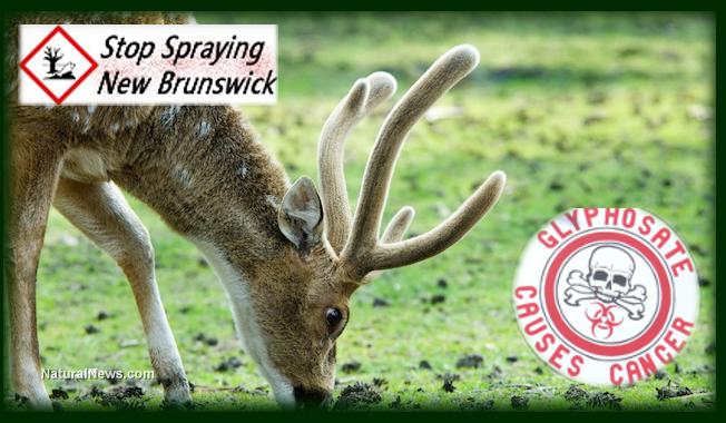 stop Monsanto spraying New Brunswick