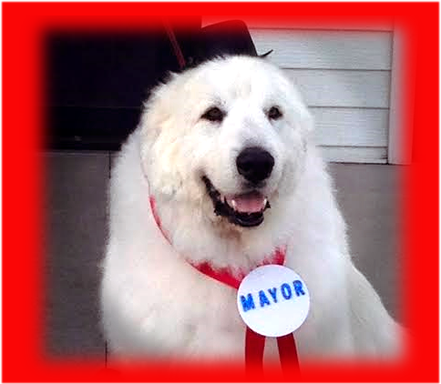 duke-the-mayor