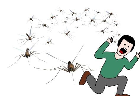 mosquito-swarm