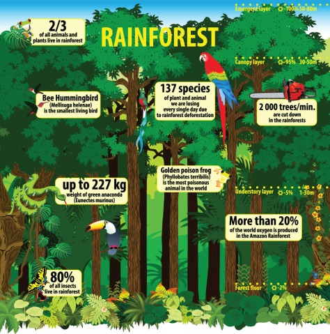 rainforest-infographic