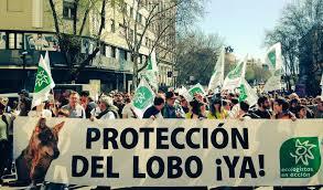 40.000 personas defienden el valor del lobo vivo en una manifestación en  Madrid
