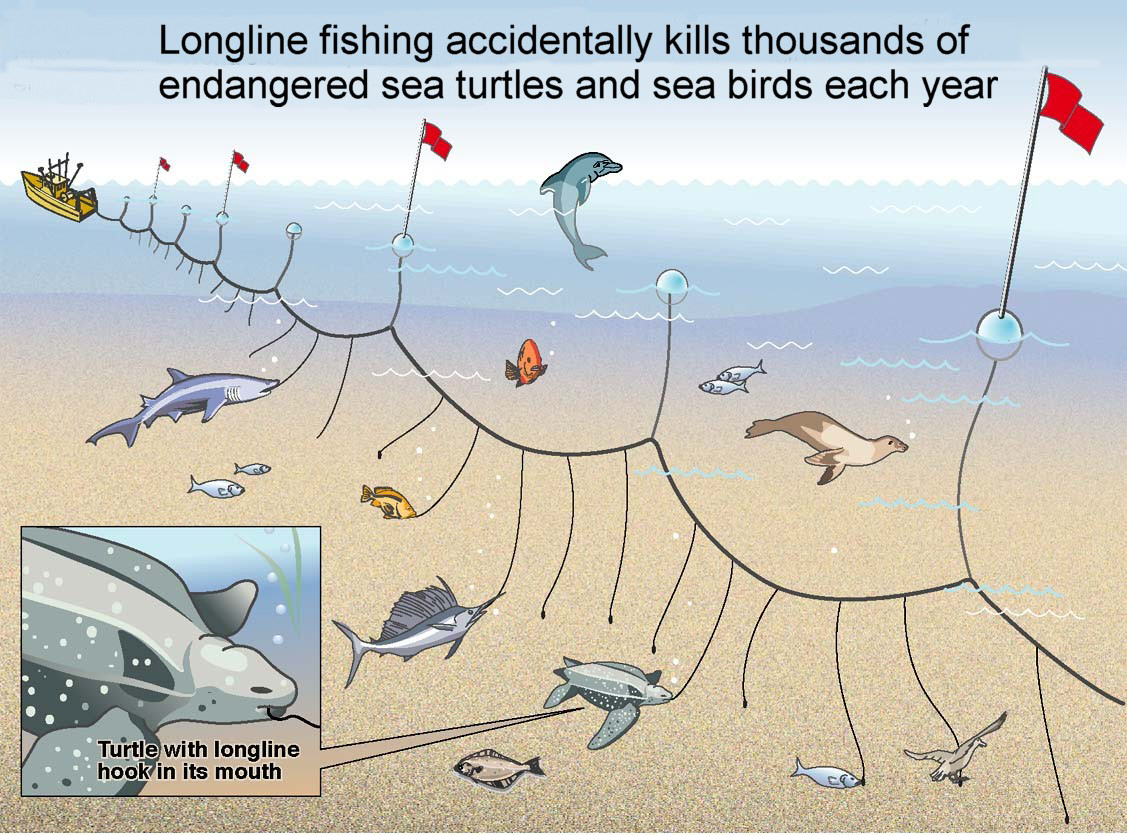Commercial Overfishing: Bycatch